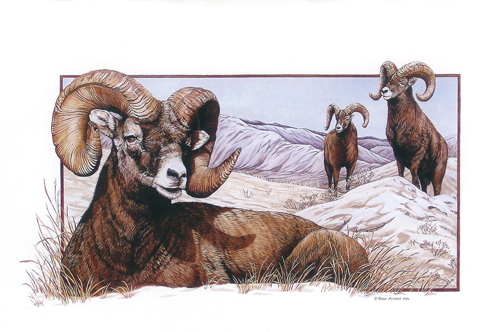 Karen Pidgeon - Big Horn Sheep