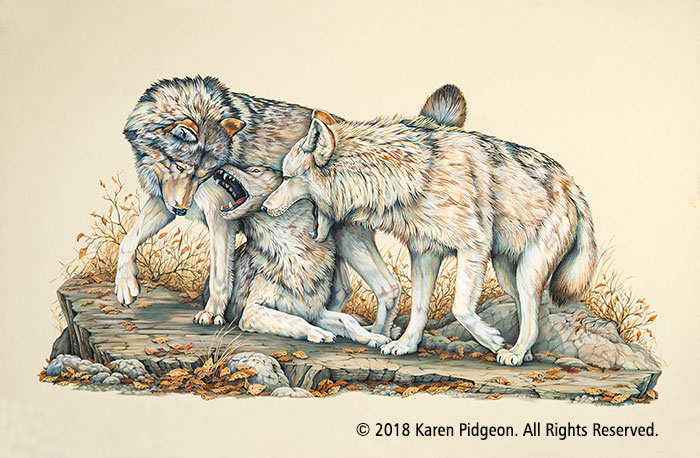 Karen Pidgeon - Wolves At Play