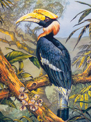 Karen Pidgeon - Great Hornbill